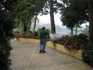 plant disease, spraying shrubs, trees, pest control, insects