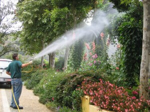 Plant Disease Spraying, insect, disease control, Ventura County, CA