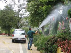 spraying tree, plant health, plant disease, pest control, ventura county