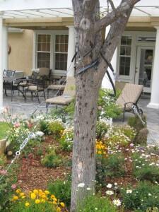 pear tree, bores, plant health, pest control, landscape, trees