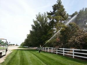 Landscape Tree & Shrub Health Care