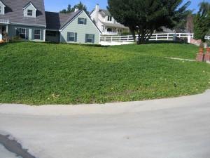red apple tree, pest control, plant disease, ventura county, landscape