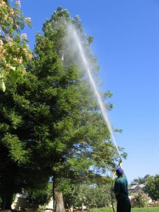 Tree Spraying Pest and Disease Control Ventura County