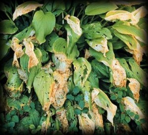 plant snail damage, insects, pests, plant disease, dying tree