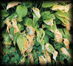 leaf snail damage, pest, insects, plant disease, weeds, trees, shrubs