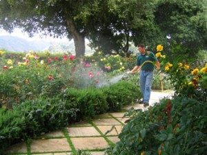 spraying flowers, shrubs, landscape, pest control, weeds, insects