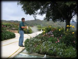 spraying flowers, plant disease, pest control, weeds, camarillo